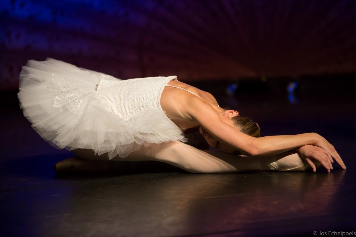 dying swan 4